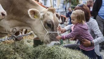 Auf dem Dornacherplatz können Kühe angeschaut und auch gestreichelt werden.
