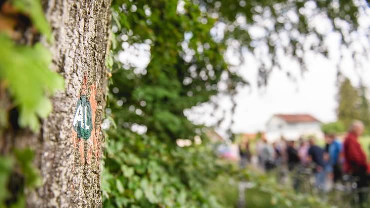 Der Baum als Grabstein: Die ausgewählten «Gräber» sind markiert.