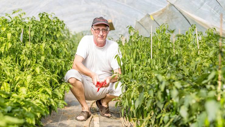 """Erich Fischer aus Stetten arbeitet auf der Bank, betreibt aber nebenbei seit 2013 eine Chiliplantage auf dem Bauernhof von Thomas Koch und verkauft seine Chili-Produkte (Saucen, Senf, Öle) unter dem Namen """"RüsstalChili"""" an verschiedenen Jahresmärkten."""