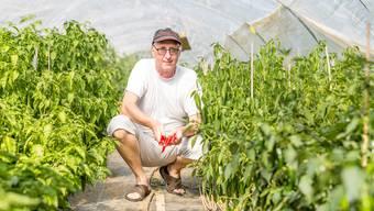 Erich Fischer betreibt in Stetten eine Chili-Plantage