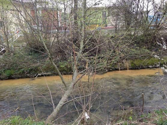 Aus zwei Schläuchen ist am 5. April bei der ARA Reinach lehmig-braunes Baustellenabwasser in die Wyna eingeleitet worden.