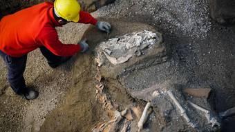 In der Nähe der antiken Stadt Pompeji haben Archäologen die Überreste eines Pferdes ausgegraben. Es ist bereits das dritte Pferd, das auf einem damaligen Landgut entdeckt wurde.