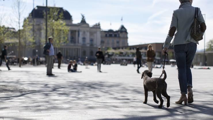 Wo soll man wie in Zukunft mit Bello in Zürich Gassi gehen?