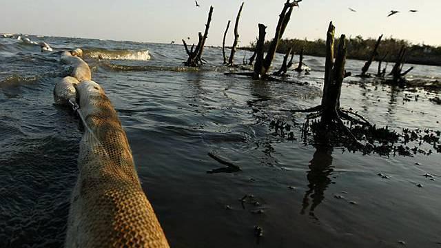 Die Küste von Louisiana wird von der Ölkatastrophe schwer getroffen
