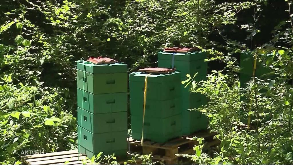 """Bienenvölker gestohlen: """"Das kann nur ein Profi gewesen sein"""""""
