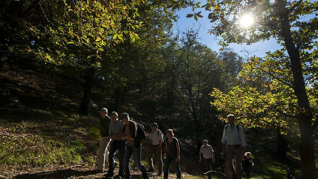 Die Wanderroute «Sentiero delle Meraviglie» im Malcantone ist bei den Nutzern der App «hikeTicino» am beliebtesten. (Symbolbild aus dem Malcantone)