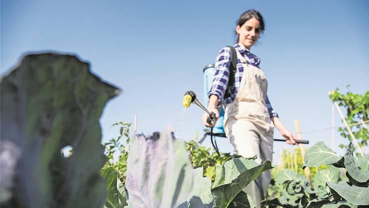 Auch als Hobbygärtner kommt man in der Schweiz zu sehr potenten Pestiziden. Getty