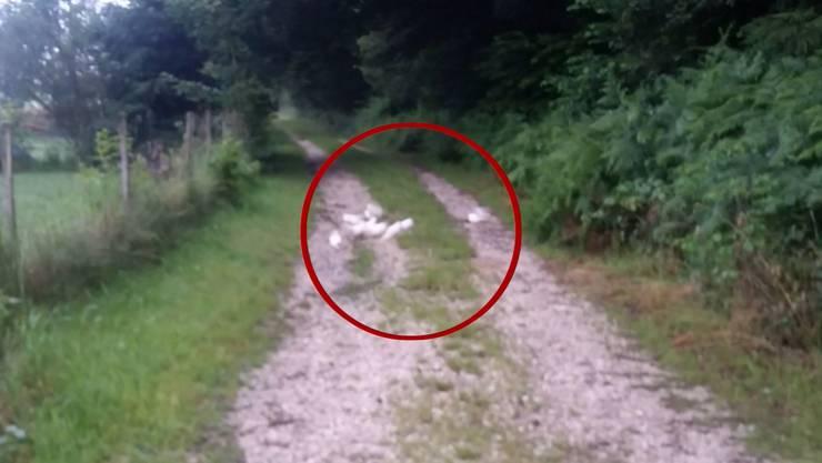 Am Waldrand fand die Regionalpolizei Zofingen die zehn Tauben.