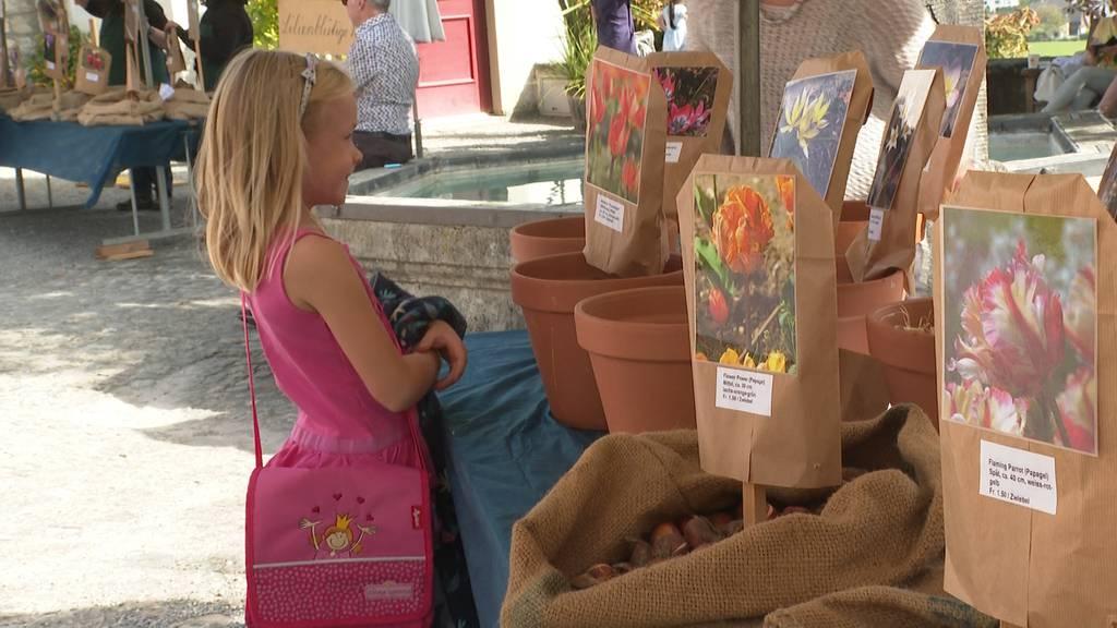 Farbenfroh: 18'000 exklusive Tulpenzwiebeln kann man auf dem Schloss Wildegg kaufen