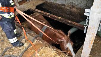 Pferd ins Güllenloch gefallen