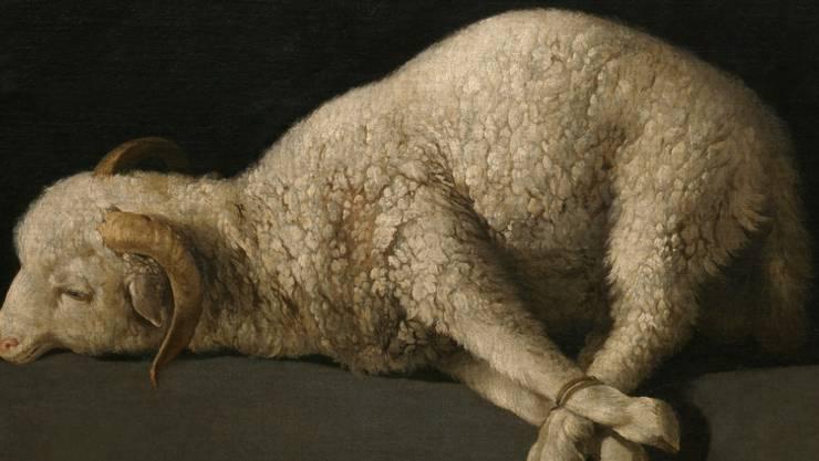 """""""Agnus Dei"""" von Francisco Zurbaràn, um 1635 bis 1640 entstanden, ist eines der Bilder aus dem Prado, die 2017 im im Kunstmuseum Basel zu sehen sein werden."""