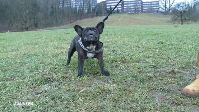 Kantonsrat will Hundeschule-Pflicht abschaffen