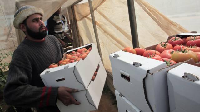 Palästinensischer Bauer im Gazastreifen