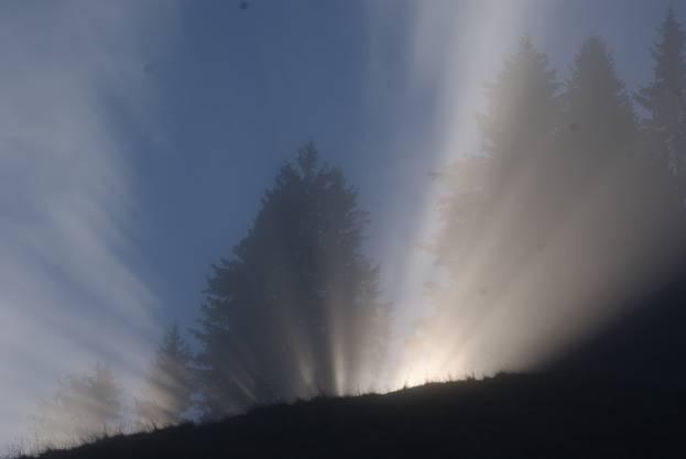Sonnenstrahlen durch den Nebel
