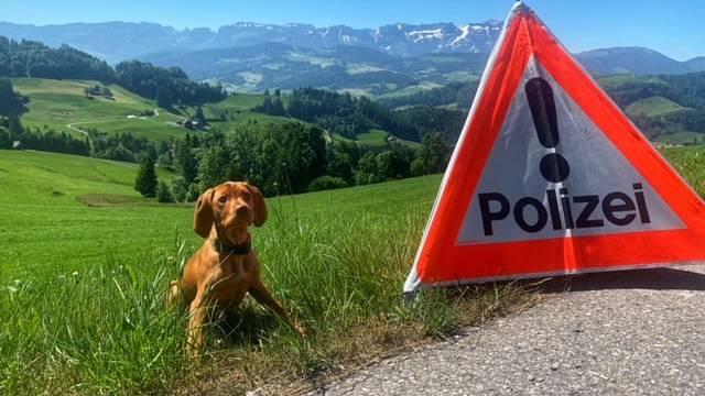 Jöö! Hündin Nala startet ihre Ausbildung bei der Polizei