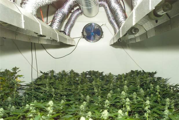 Wer zum Beispiel eine Indoor-Hanfplantage betreibt, wird nicht mit einer Ordnungsbusse abgestraft, sondern strafrechtlich verfolgt.