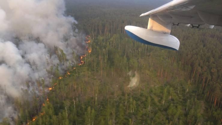 In Sibirien ist bei Bränden eine Waldfläche in der Grösse von drei Vierteln der Schweiz abgebrannt.