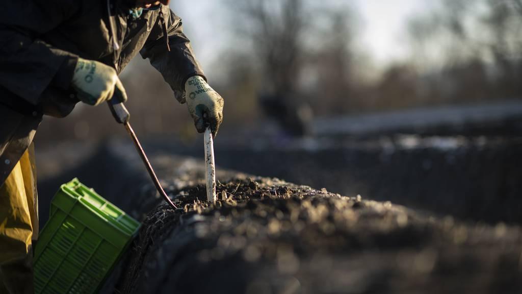 Viel Arbeit, wenig Ertrag: Bauerngewerkschaft fordert bessere Arbeitsbedingungen
