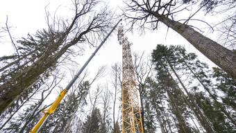 Der Grossversuch der Uni Basel im Hölsteiner Wald zeigt, dass Bäume wegen des Klimawandels auch verhungern.