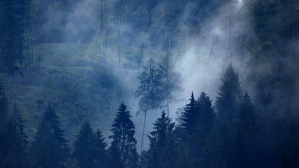 In bewaldeten Gebieten in Europa gibt es mehr Niederschlag als in landwirtschaftlich genutzten Regionen. Aufforstungen könnten demnach vielleicht Dürreperioden entgegenwirken. (Archivbild)