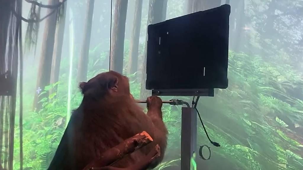 Dieser Affe spielt Pingpong nur mit seinen Gedanken