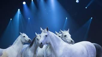 Diese Pferde sehen am Samstag Berner Kinder auch dank Geld aus den Vereinigten Arabischen Emiraten. (Archivbild)