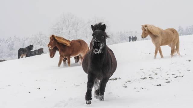 Das Warten geht weiter – so zauberhaft wäre der Aargau im Schnee