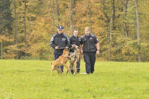 Neun Hunde aus Baselland und Baselstadt messen sich and dieser Prüfung.