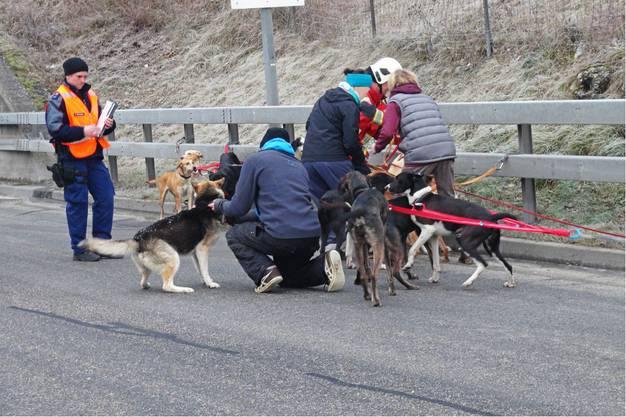 Die Hundebsitzer kümmern sich um die 15 Tiere. Verletzt wurde beim Unfall niemand, auch die Tiere kamen nicht zu Schaden.