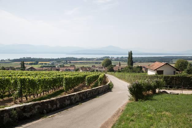 Bursins ist ein 800-Seelen-Dorf im Kanton Waadt...