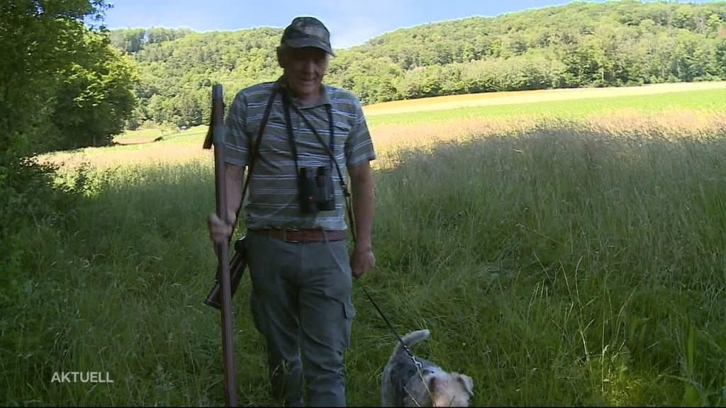 Vier tote Rehe innert fünf Tagen in Wald aufgefunden