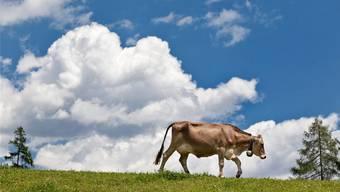Kühe sorgen für Wirbel: Ein Landwirt landet vor Gericht, weil er kein Journal über den Auslauf seiner Tiere geführt hat. (Symbolbild)