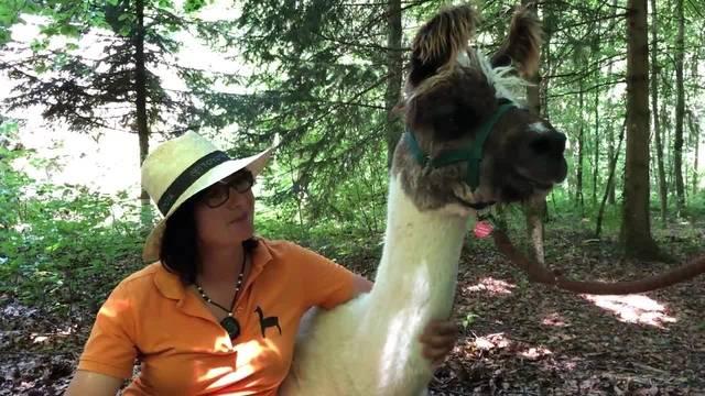 Leserwandern 2018, 3. Etappe: Tanja Burkolter und Lama-Dame Catania
