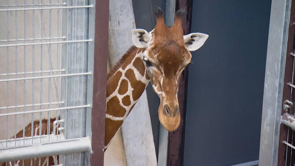 Tierische WG – Gemeinschaftshaltung im Zoo, Teil 1