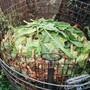 Komposthaufen sind ein wertvoller Beitrag zur Artenvielfalt.