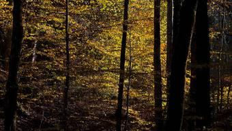 Das Potenzial zur Holznutzung soll künftig besser ausgeschöpft werden (Archiv)