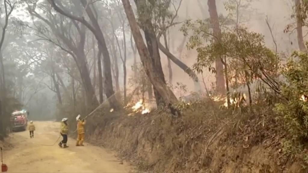 Brände in Australien breiten sich aus - Hilfe für Helfer