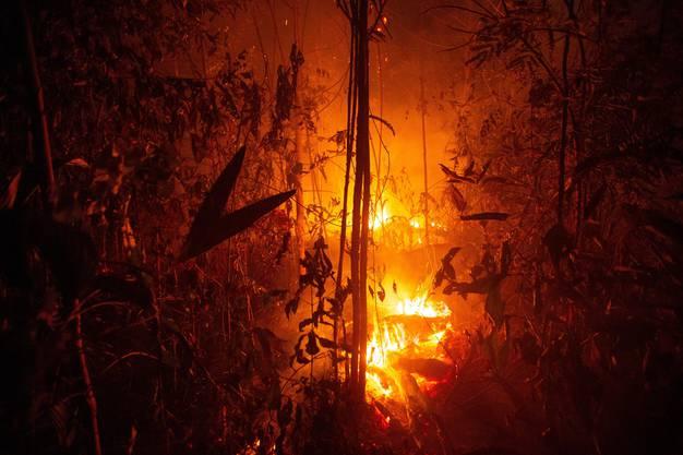 Seit Januar nahm die Zahl der Feuer und Brandrodungen im grössten Land Südamerikas im Vergleich zum Vorjahreszeitraum nach Angaben der brasilianischen Weltraumagentur INPE vom Sonntag um 82 Prozent zu.