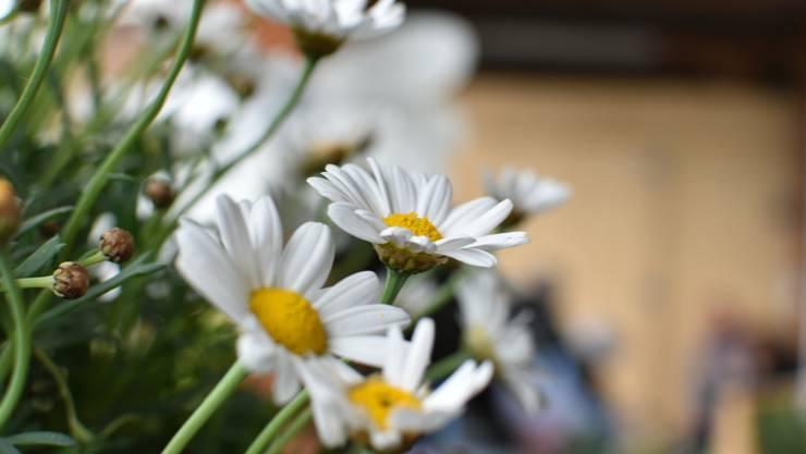 Der Frühling ist nicht abgesagt - ein Grund um unsere Mitglieder mit einer Geste der Herzlichkeit und Verbundenheit zu überraschen.