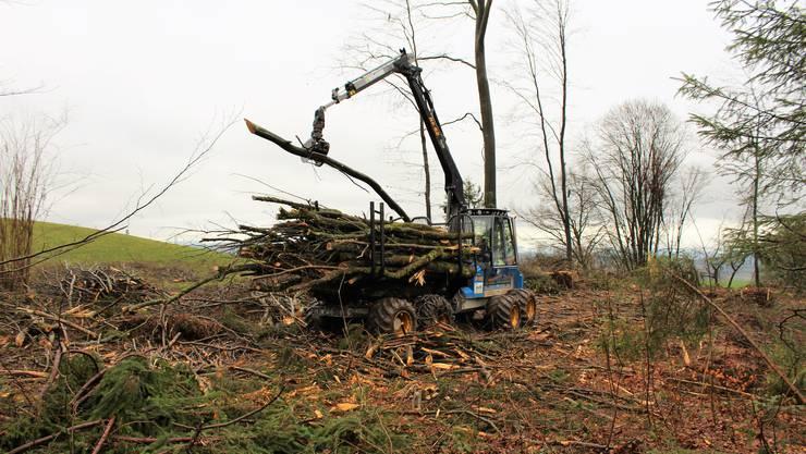 Sturmholz wird mit einem Holztransporter, dem Forwarder, abtransportiert.