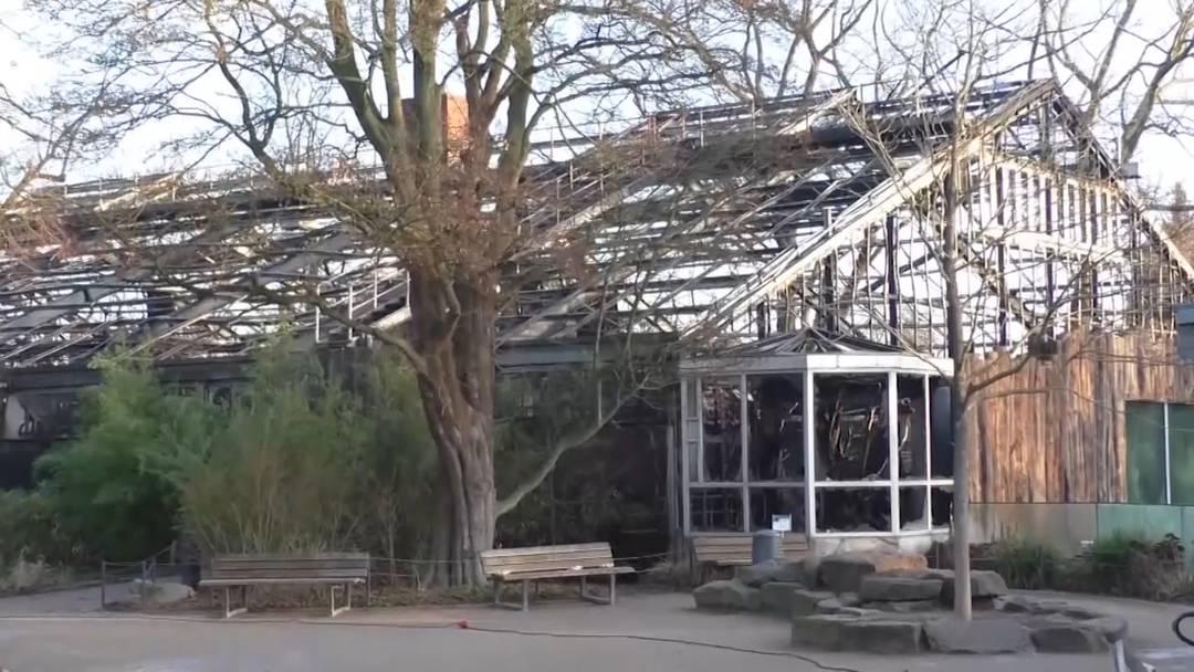 Affenhaus abgebrannt: Über 30 Tiere tot