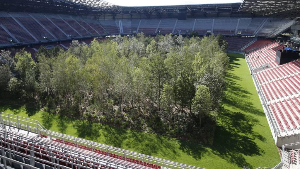 Schweizer Wald-Kunstprojekt im Fussballstadion eröffnet