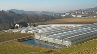 Gemüsebauern möchten mehr Gewächshäuser betreiben.