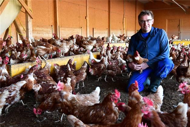 Die Hühner dürfen den Wintergarten zurzeit nicht verlassen.