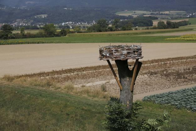 Noch ist der Storchenhorst leer.