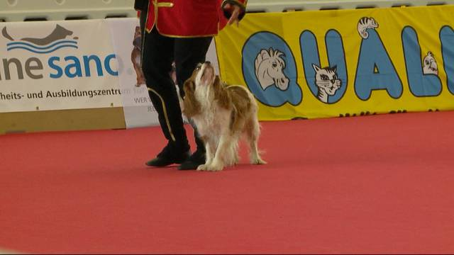 Tanzende Hunde in Winterthur