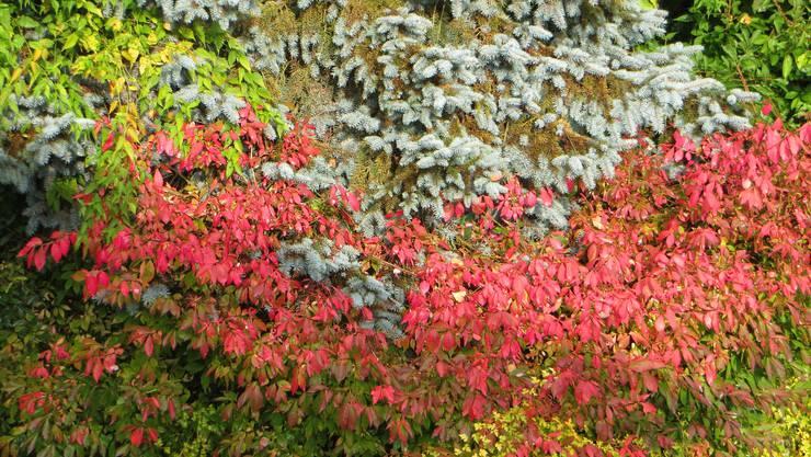 Die Blätter färben sich.