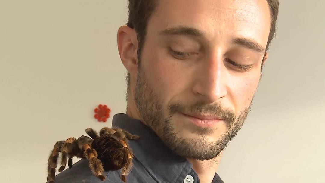 «Die ist jetzt wirklich ziemlich gross»: Zu Beginn des Seminars war es Dominik Wolfinger alles andere als wohl beim Gedanken, Vogelspinne Sophie zu berühren.