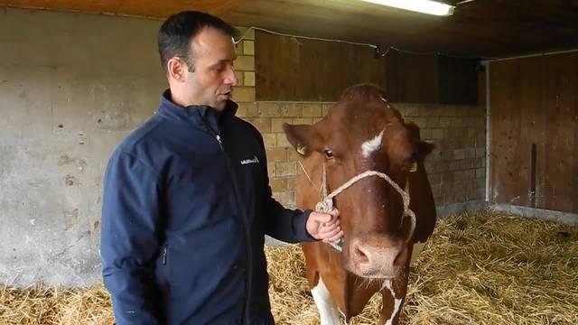 Landwirt David Flury stellt seine beste Milchkuh im Stall vor und sagt, was es braucht, damit die Kühe lange und viel Milch geben.