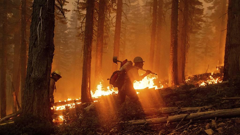 Brände verwüsten den Westen der USA - Trump in Kalifornien